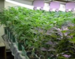 indoor grow 6a