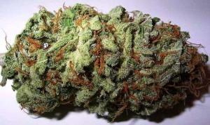 medical excuse marijuana